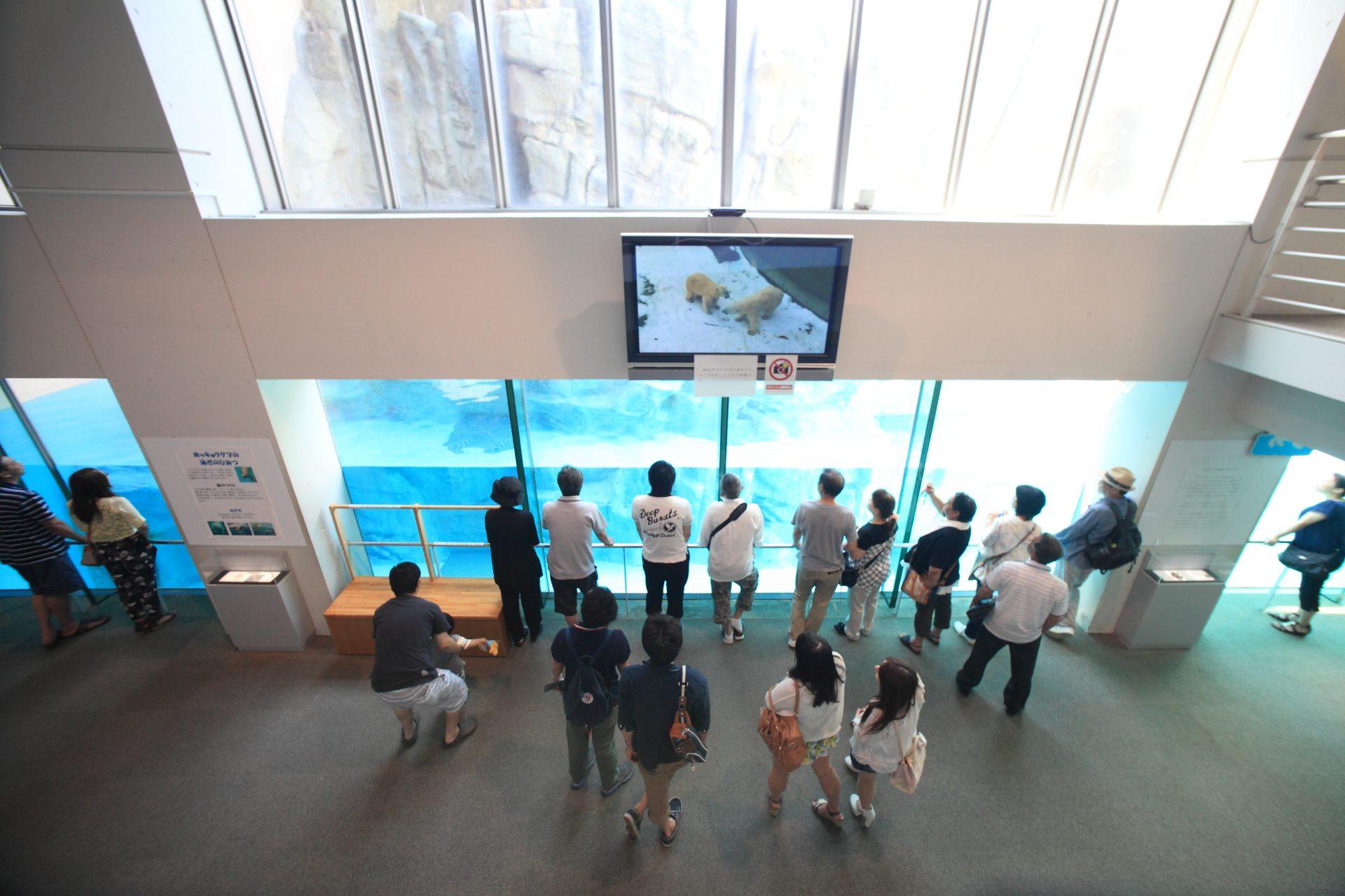 写真:男鹿水族館 GAO5