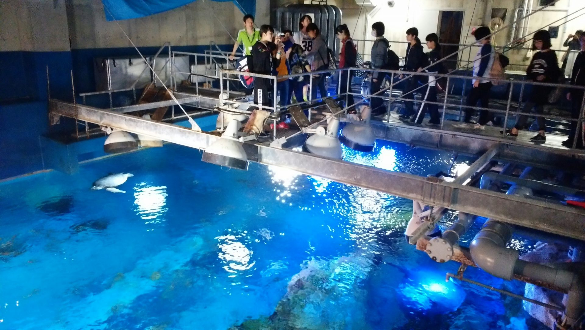写真:男鹿水族館 GAO1