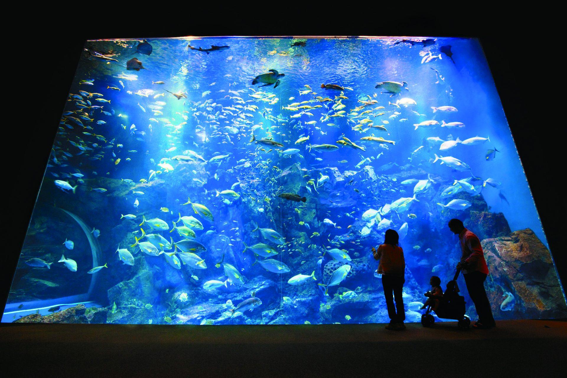 写真:男鹿水族館 GAO4